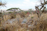 40721_132_Serengeti-Naabi-Hill.JPG