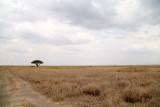 40721_134_Serengeti.JPG