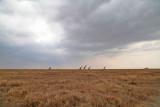 40721_138_Serengeti.jpg