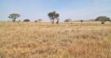 40722_116_Serengeti.jpg