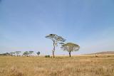 40722_120_Serengeti.jpg