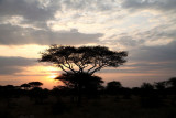 40722_130_Serengeti-Sunset.JPG