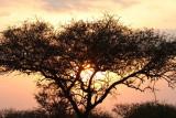 40722_132_Serengeti-Sunset.JPG