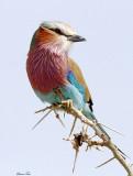 North East Tanzania Birds