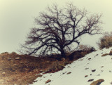 tree with snow and rocks