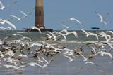 Sandbar with birds