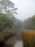 River and marsh views with fog