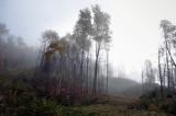 Coupe forestière à Chute-Saint-Philippe