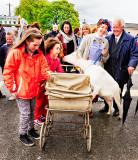 Goat Investigates Pram