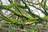 Storm Darwin - Trees Down