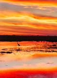 Linyanti Sunset