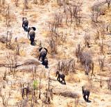 Kalahari Elephants