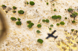 Okavango Dry Season