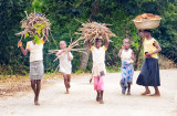 Cassava Planting Crew