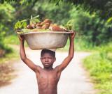 Cassava from the Farm