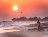 Red Kite Sky