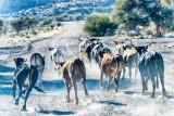 Thundering Herd