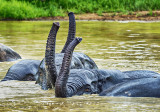 Young Elephants Bathing