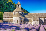 Sénanaque Abbey - Early Morning