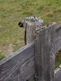 Fence A024761