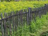 Fence 8119680