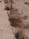 Fences 22137
