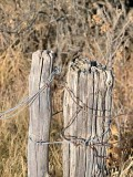 Fences 2368