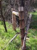 Fences 42494