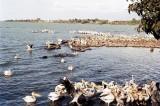 Lake Tana/Blue Nile Falls