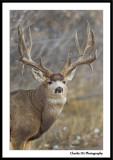 Deer Pictures...