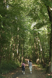 Walking in the fresh forest.