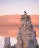 Bird on Tufa Column