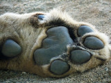 Big cats paw.jpg