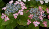 flowers_and_gardens