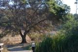 Bridge & Favorite Tree