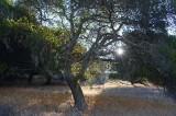 Sunstar Through the Trees