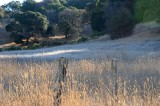 Posts In Lit Grass