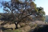 Great Tree