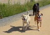 Friendly Dog Trio