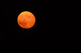 Close View of Almost Harvest Moon