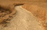 S Curve Path