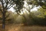 Light Rays Through the Trees