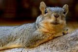 Squirrel Lips
