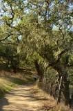 Mossy Tree Along Path