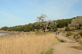 Loop Around Cemetery Marsh