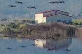 Two Layers of Flying Geese