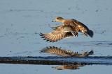 Spread Wing Landing