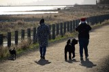 Santa Hat Dog Walkers