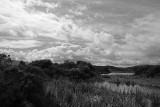 Pond One in Black & White