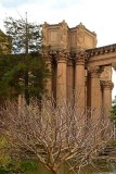 Bare Tree and Columns